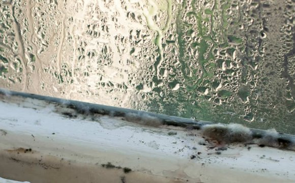 Condensation and Mould