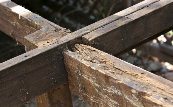 What Is Dry Rot? Part 1