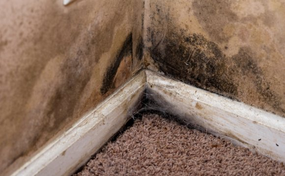 Get rid of damp walls