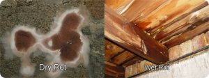 difference-between-wet-rot-dry-rot