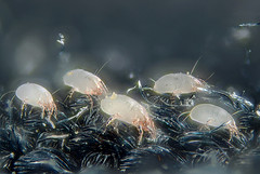 Dust mites can thrive in a dirty air conditioning duct system, but is cleaning the answer?