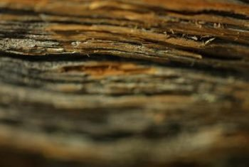Rot must be removed to prevent its spread to surrounding wood.