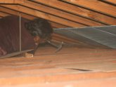 Installing Attic insulation Baffles
