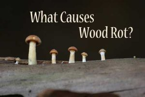 what causes wood rot